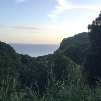 road to hana views